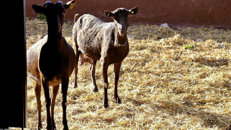Secano y ganadería, los frentes de la PAC en Murcia tras el acuerdo de la UE