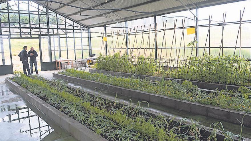 Resueltas las solicitudes de los nuevos agricultores ecológicos