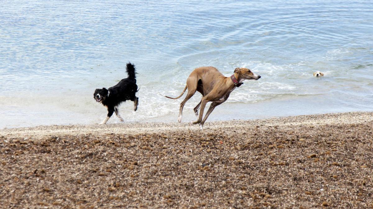 Seis playas en Mallorca para ir con tu perro