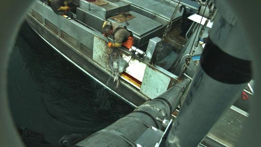 Bruselas rechaza que las cámaras a bordo de barcos de pesca deban ser obligatorias