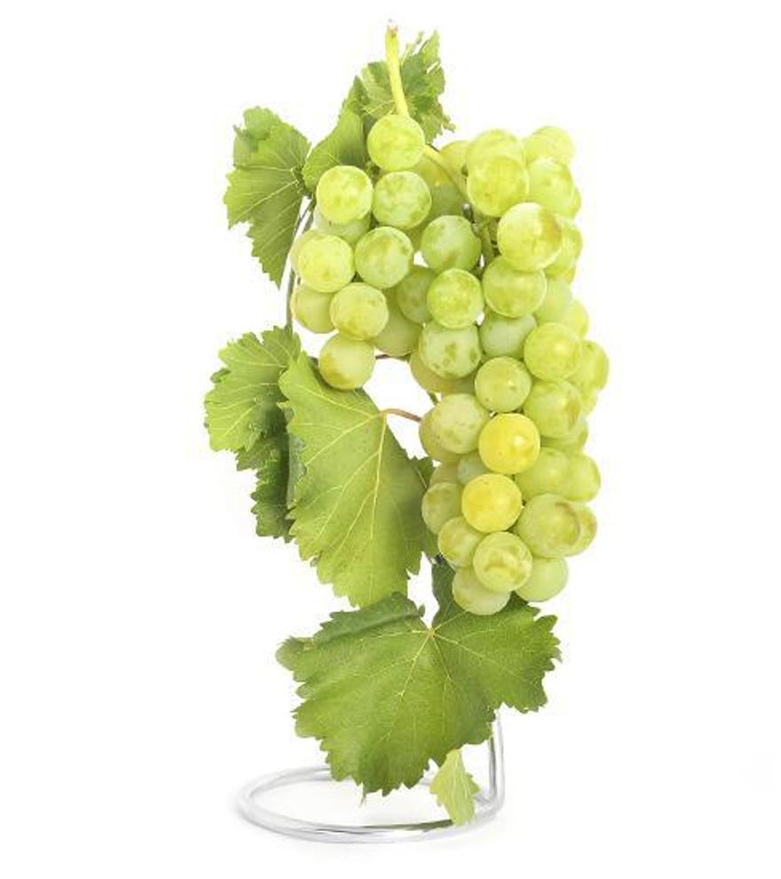 Alicante celebra el día de la uva Moscatel