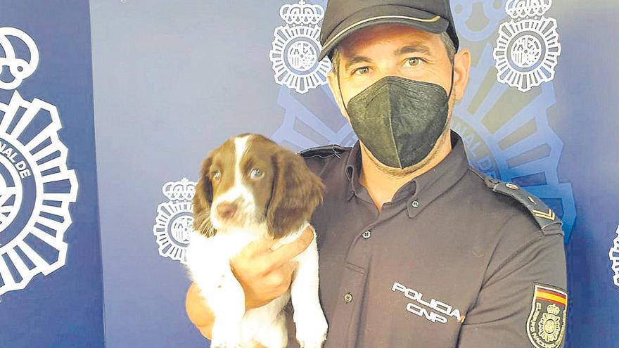 La Policía Nacional de Palma incorpora a la nueva perra policía 'Sisu'