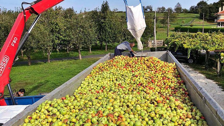 A Estrada hará en septiembre una Feira da Sidra de formato reducido, justo antes de recoger su manzana