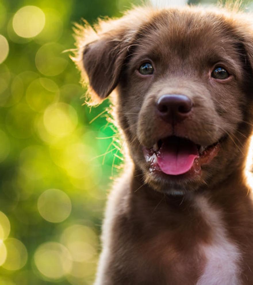 Cuidados básicos para los cachorros que llegan a casa