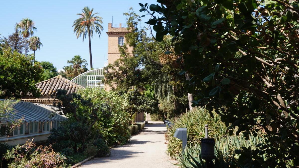 Vegetación en el Jardín Botánico de Valencia