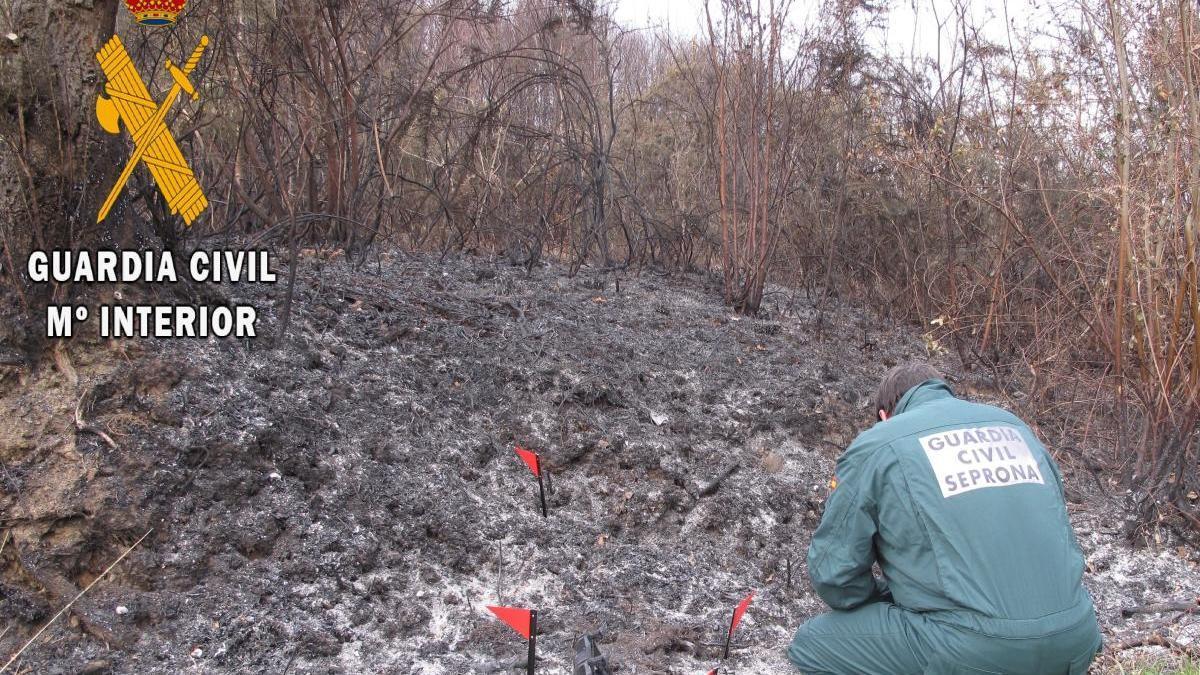 Un agente del Seprona busca pruebas del inicio de uno de los incendios.