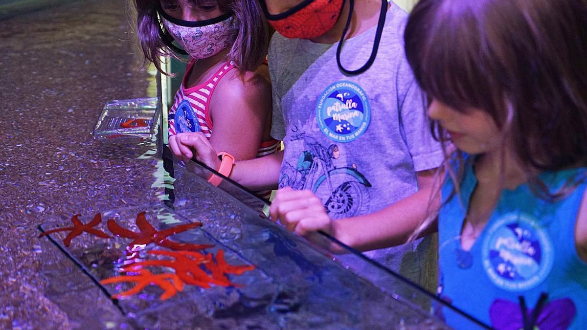Escolars observant mostres biològiques d'estreles de mar, durant una visita a l'Oceanogràfic. | LEVANTE-EMV