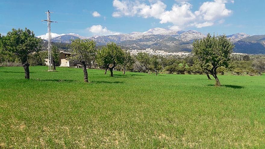 Auch Projekte für kleinere Solarparks haben es auf Mallorca schwer