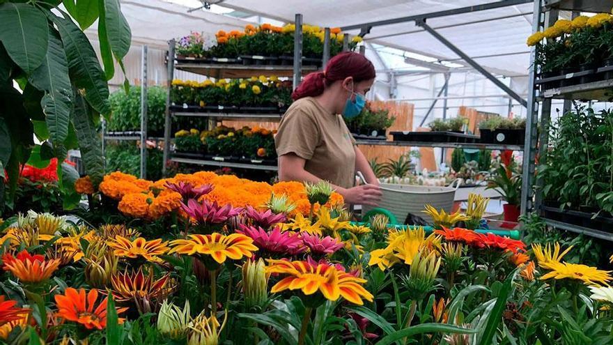 Vuelta al trabajo en Gardeniers