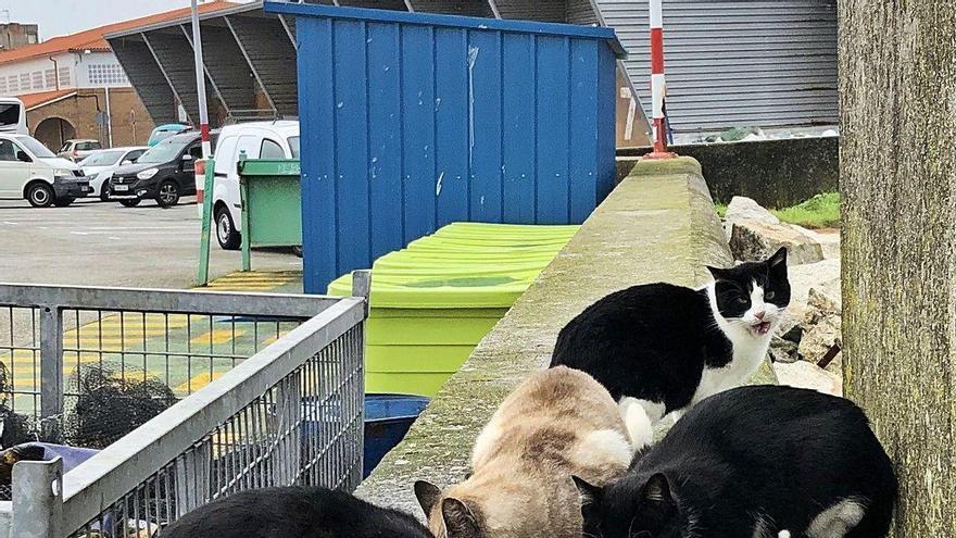 """""""O Jato Meco"""" denuncia la falta de apoyo municipal para controlar las colonias de animales callejeros"""