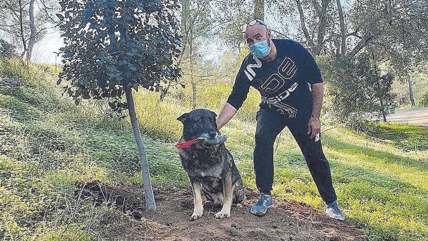 Palmario | El perro «Buddy ya tiene una familia, ¡¡¡dejadlo en paz!!!»