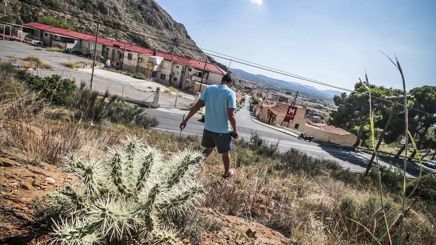 La retirada de cactus Arizona de la sierra de Orihuela arranca la próxima semana