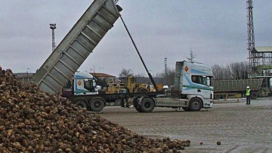 Los productores de remolacha se ven amenazados por el acuerdo UE-Mercosur