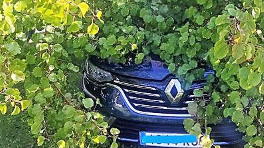 El PP reitera que hace falta control de arbolado tras los daños a un coche