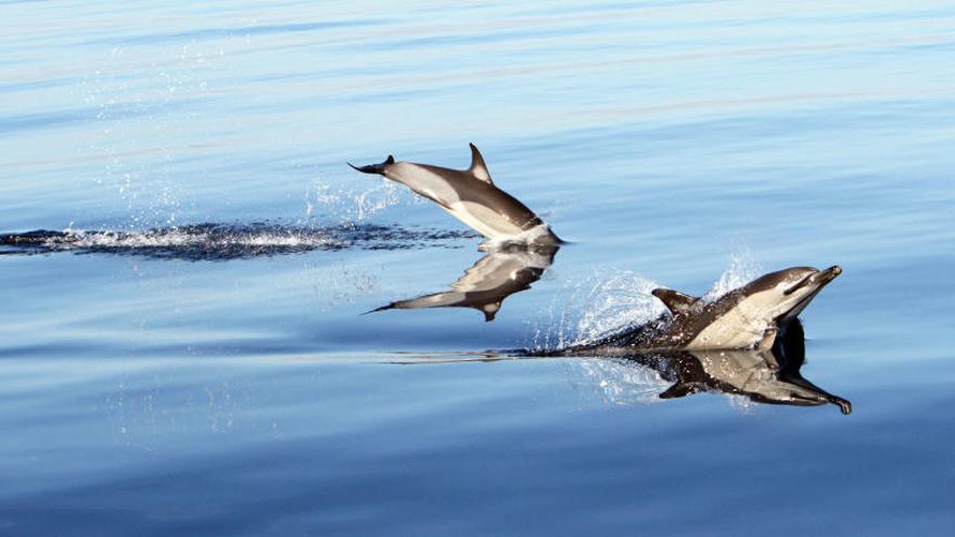 La UV analizará la distribución y la población de cetáceos en el mediterráneo