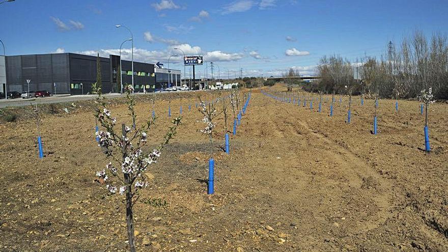 Medio Ambiente pide al Centro de Transportes de Benavente que refuerce el mantenimiento