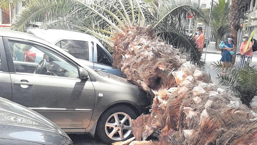 La tercera palmera que cae en un mes daña a tres vehículos
