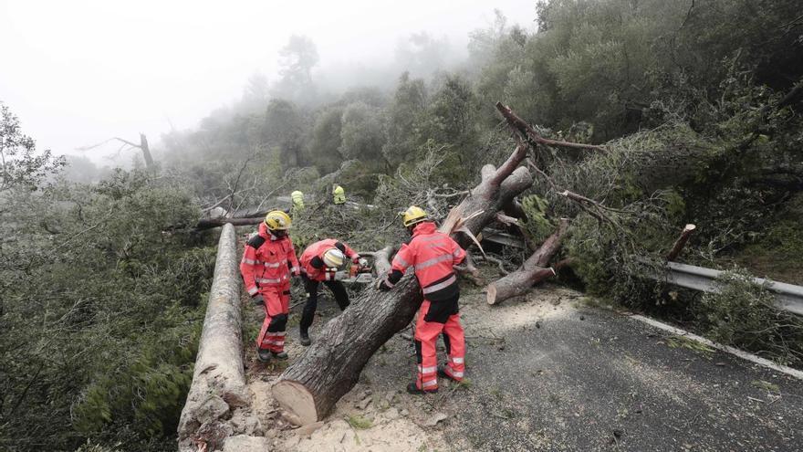 Mallorca beginnt mit Forstarbeiten nach Windhose