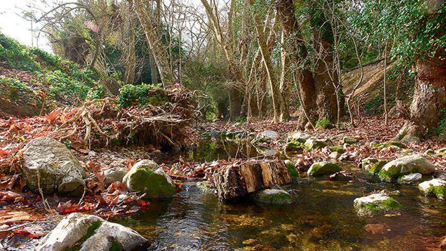 Bäume gegen die Wasserflut auf Mallorca