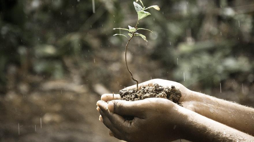 ¿Es bueno regar las plantas con agua de lluvia?