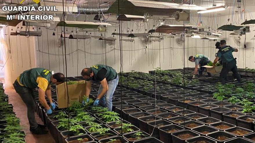 Tres detenidos en Corbera con 800 plantas de marihuana