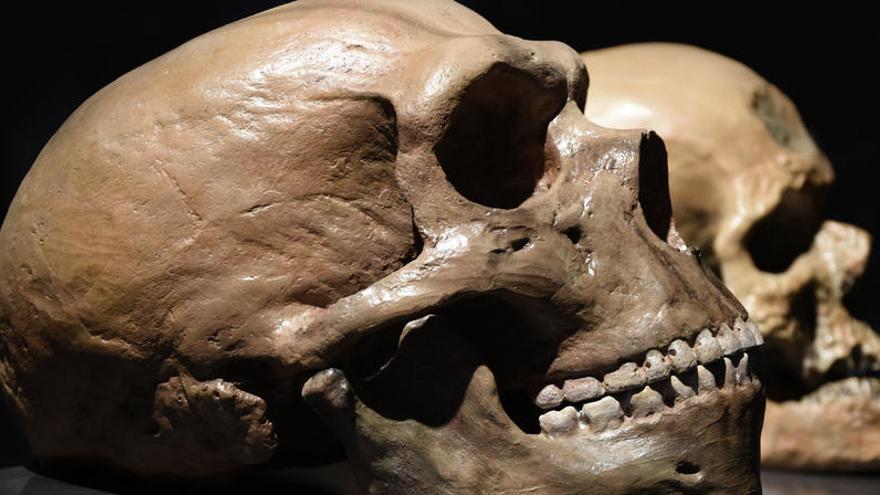 Los bebés neandertales eran destetados a los seis meses
