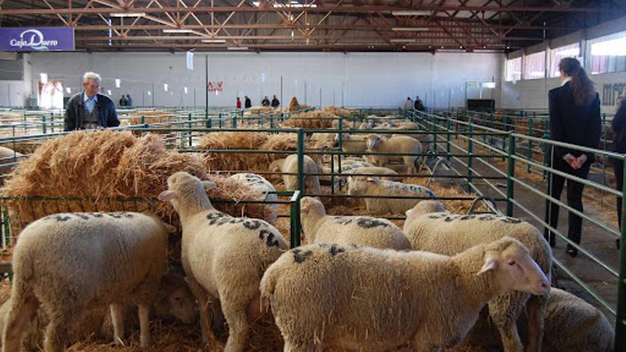 La Feria Agroganadera de Trujillo se desarrollará como en años anteriores