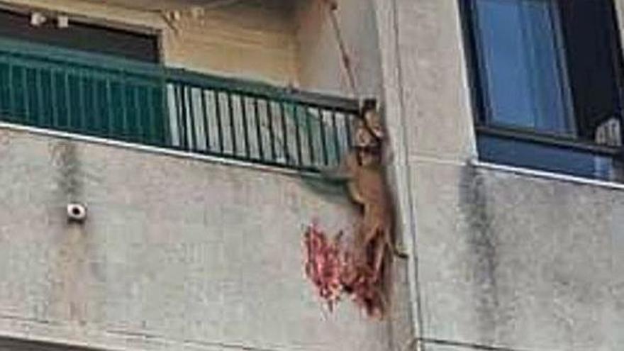 La perrita, el domingo colgando del balcón de Bellreguard. | LEVANTE-EMV
