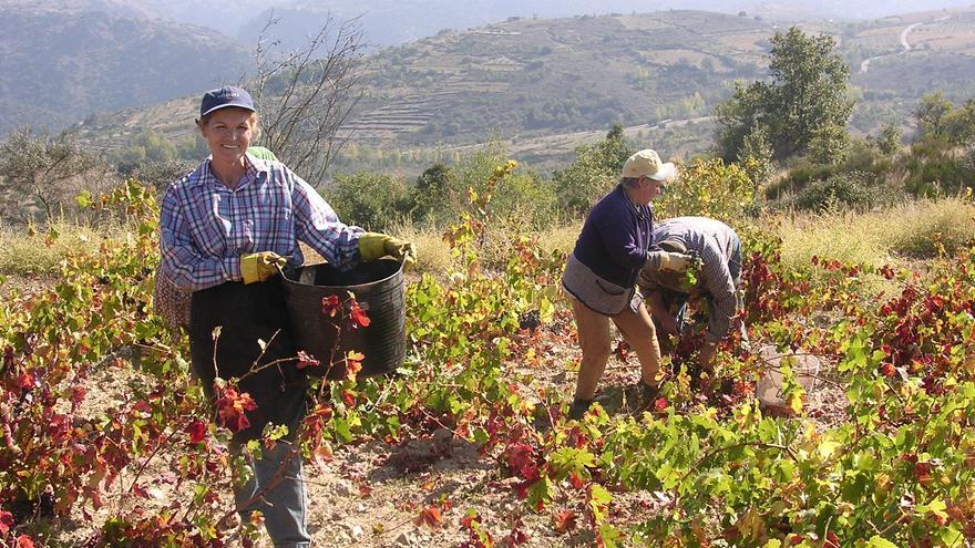Las primeras uvas de la D.O. Arribes ya entran en las bodegas
