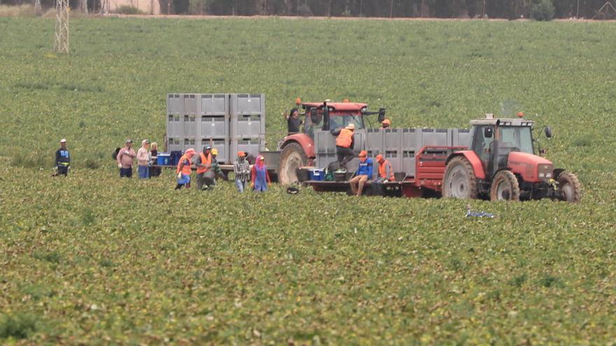 """El empleo agrario ha alcanzado """"un máximo histórico"""" con la pandemia"""