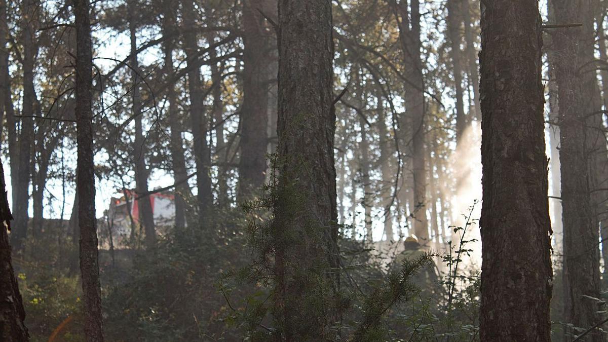 Imatge d'un incendi forestal que va tenir lloc a Olius l'any 2017 i que va afectar cinc hectàrees | ARXIU/ANNA PUJOL
