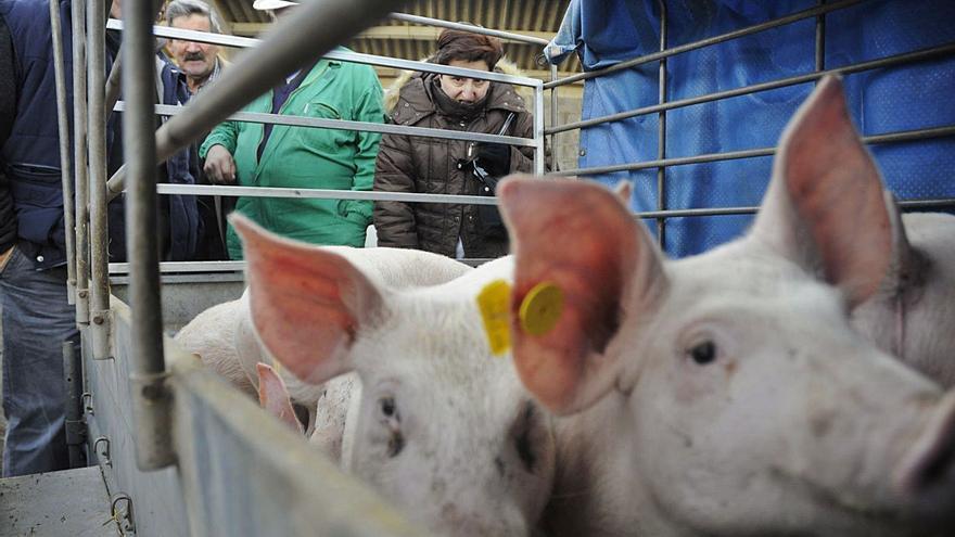 Agolada quiere reactivar la feria del 12 pese a no recibir animales desde marzo