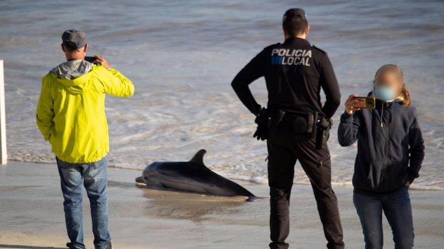 Delfin verendet am Strand im Südosten von Mallorca