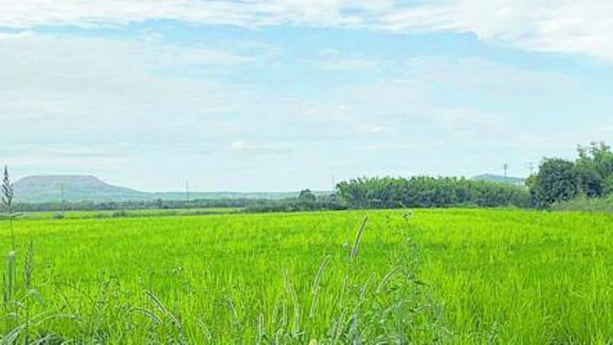 L'arròs de Pals, un producte respectuós amb el medi ambient