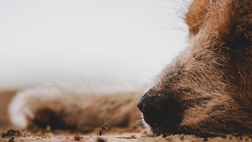 Siete meses de cárcel por pegar un tiro a un perro que entró en su finca de Murcia