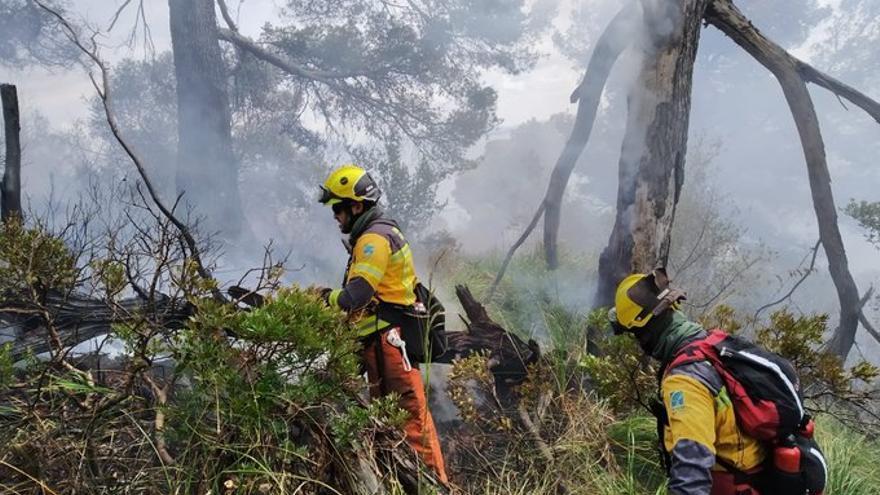 Un incendio forestal consume 1,5 hectáreas de pinar en Alcanada
