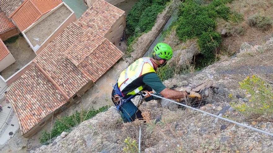 La Guardia Civil rescata un buitre atrapado en una pared vertical en Los Fayos
