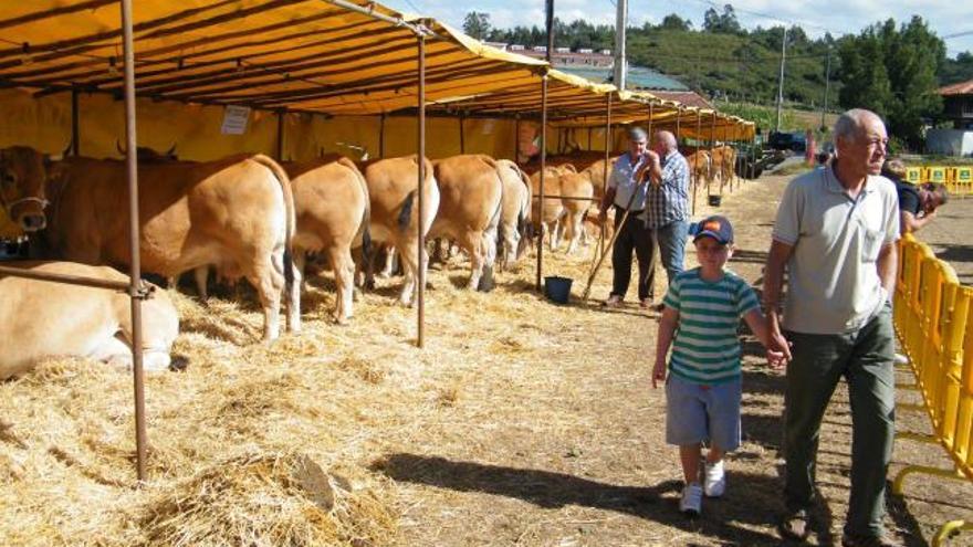 Santullano  presume de ganado