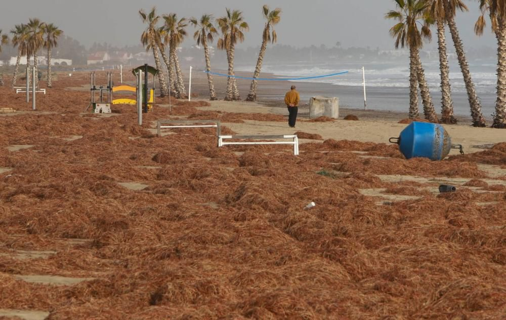 Una boya y restos de algas en la playa de Canet.