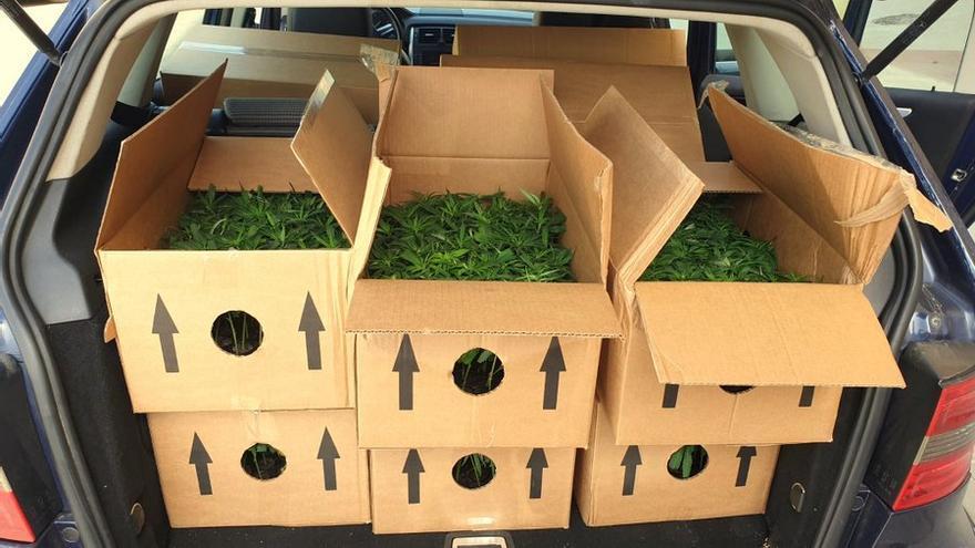 Aturen un conductor a Blanes per portar la ITV caducada i li troben uns 1.000 esqueixos de marihuana al cotxe