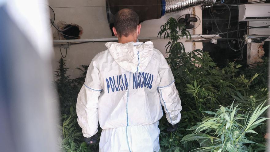 El incendio en una vivienda de Elda permite descubrir una plantación de marihuana