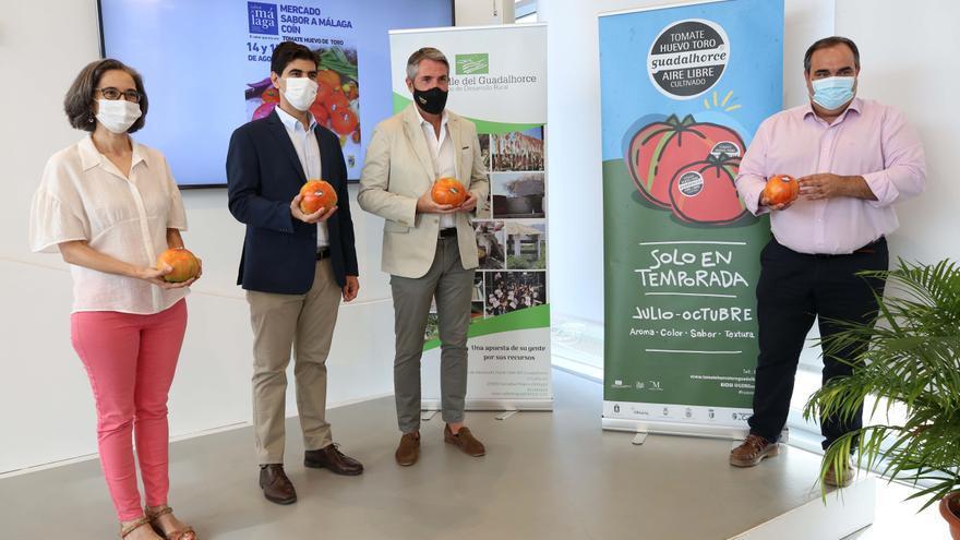 El Mercado Gastronómico de Coín se dedicará al tomate Huevo Toro