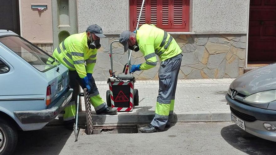 El confinamiento y el cierre de locales han incrementado las plagas en Palma