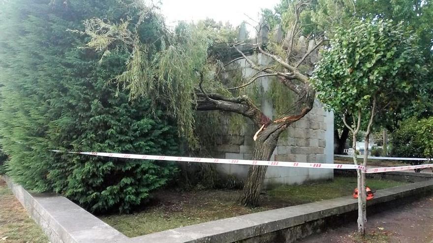 El temporal derriba la rama de un árbol sobre la Capela do Hospital