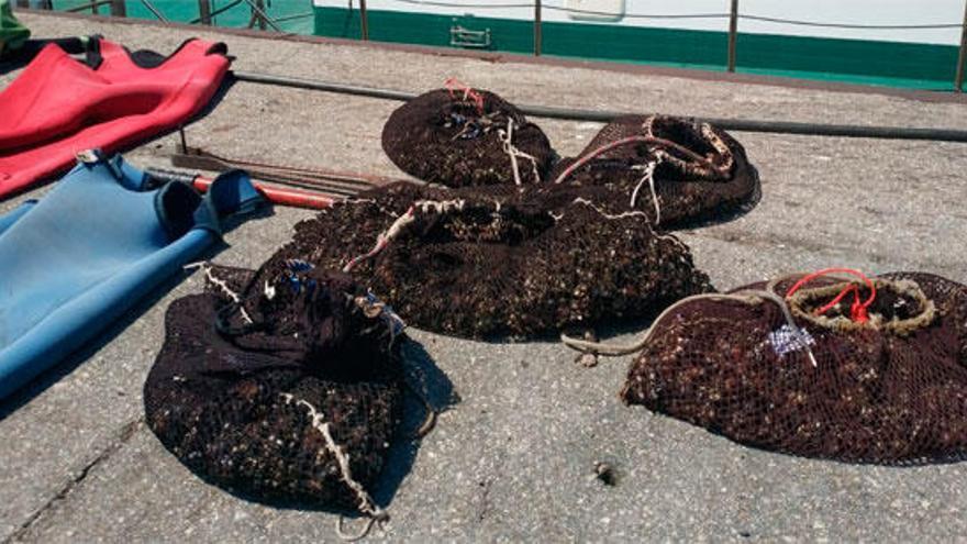 Incautan 38,28 kilogramos de percebe y utensilios para su pesca en Seixo Branco