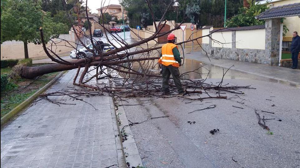 El viento provoca la caída de una decena de árboles en Riba-roja de Túria