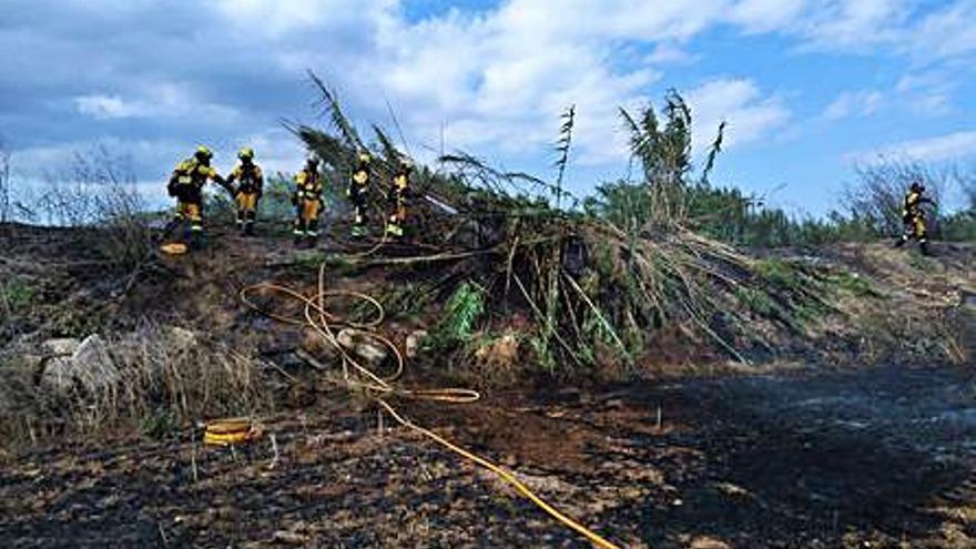 Un incendio arrasa unos 3.000 metros de cañizo en sa Pobla