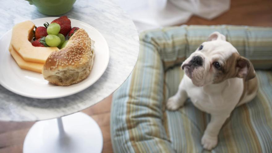 Alimentos que nunca deben comer nuestros perros y gatos