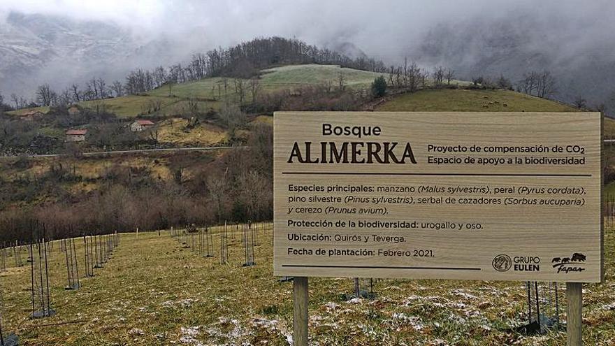 Alimerka planta 3.600 árboles para reducir su huella de carbono
