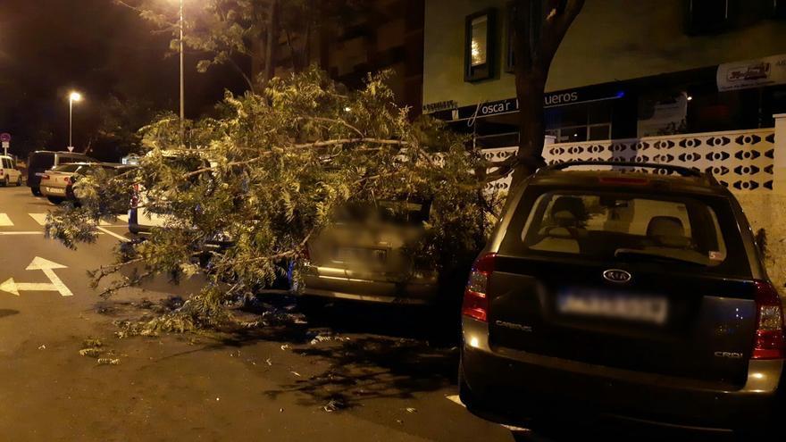 Las fuertes rachas de viento derriban un árbol en Santa Cruz